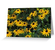 """""""A Bunch of Blackeyed Susans"""" Greeting Card"""