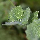 Dewdrop diamonds and dandelions 5 by Barbara  Glover