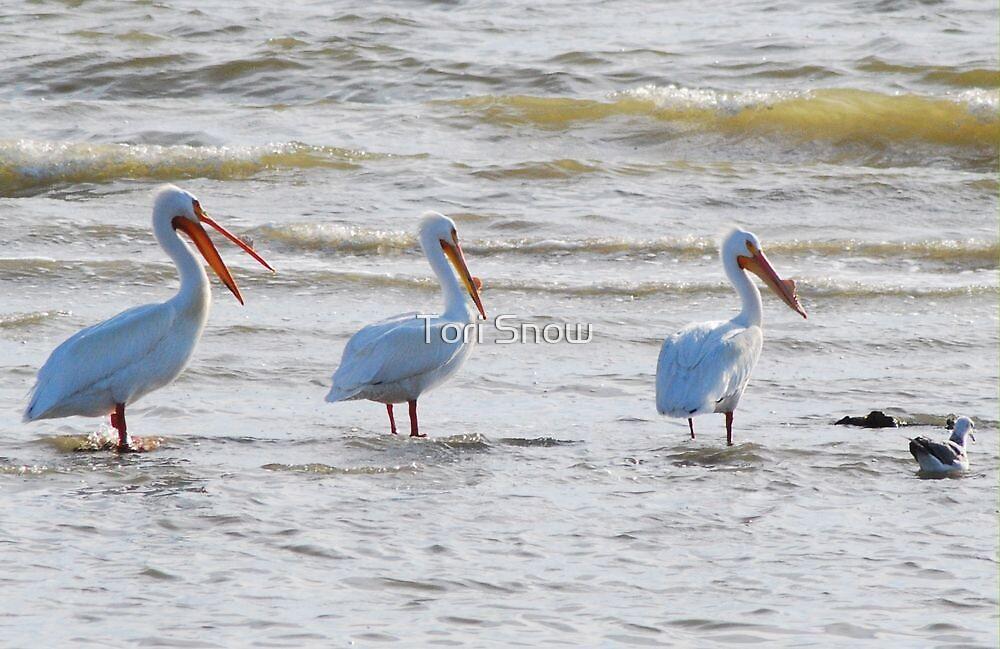 Pelicans Three by Tori Snow