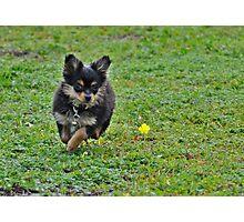 Run India Run!!!! Photographic Print