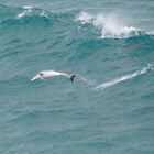 Surfing Dolphins. by Kylie Jones