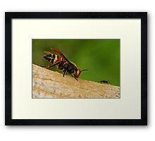 big to small Framed Print