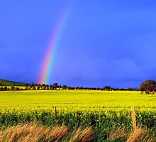 Pot of Gold by Sarah Donoghue