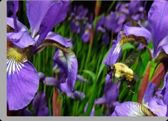 Bee Flying In Siberia by Brian Pelkey
