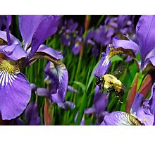 Bee Flying In Siberia Photographic Print
