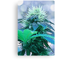 Cartoon Bud Canvas Print