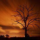 Dead Wood - Toowoomba Qld by Beth  Wode