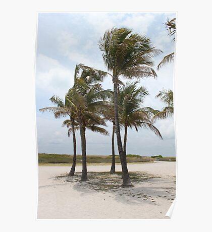 Palm Beach Palms Poster