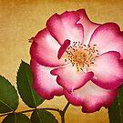 Betty Boop Rose by Leslie Nicole