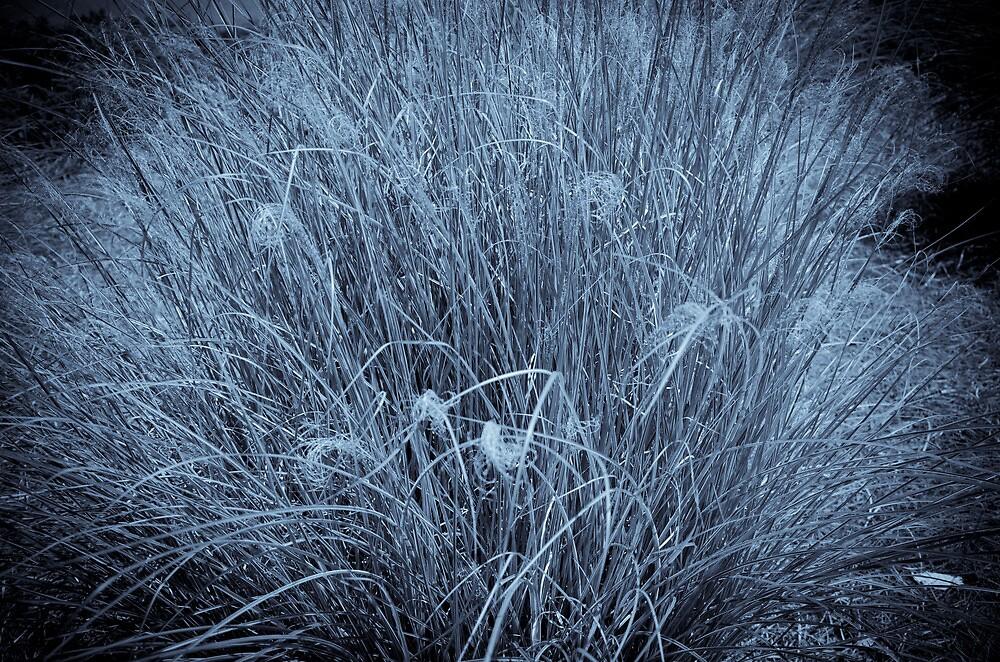 Kentucky Morning Grass by DBGuinn