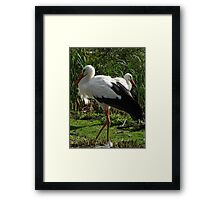 Going For A Wander Framed Print