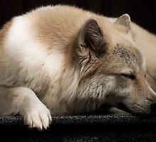 Just sleeping by Thivan