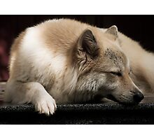 Just sleeping Photographic Print
