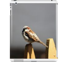 House sparrow sits on a picket fence iPad Case/Skin