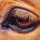 Horse eye by Elena Kolotusha
