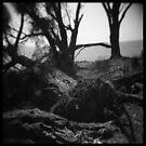 Trees #03 by PetroniusArbit