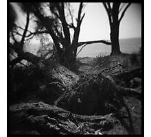 Trees #03 Photographic Print