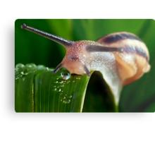 The Magical Kingdom of Snails Metal Print