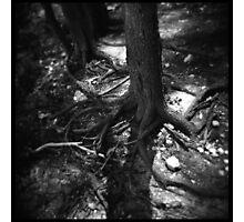Trees #04 Photographic Print