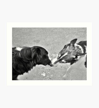 Collie Kisses Art Print