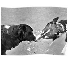 Collie Kisses Poster