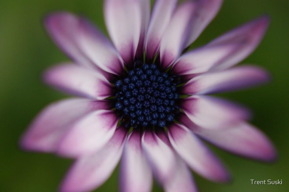 Close up (Purple Flower) by Trent Suski