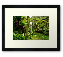Dorrigo Mountain...15-6-11. Framed Print