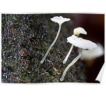Fungi Season 1114 Poster