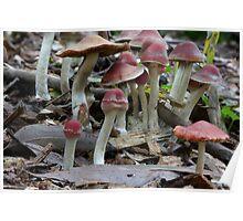 Fungi Season 1116 Poster