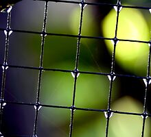 Enmeshed drops by lensbaby