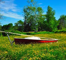 Sailboat in a Field of Buttercups, Friendship, Maine by fauselr
