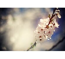 spring Photographic Print