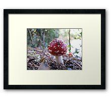 Magic Mushroom #2 Framed Print