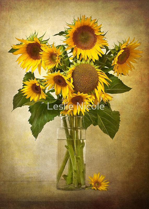 Summer by Leslie Nicole