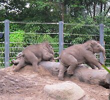 Baby Elephants #1 by axemangraphics