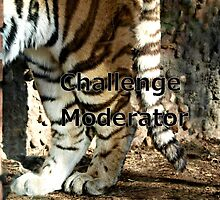challenge moderator by Barb Miller