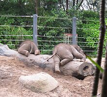Baby Elephants #2 by axemangraphics