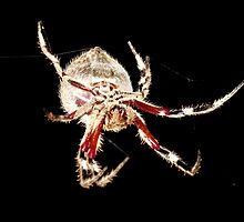 Orb Spider #5 by axemangraphics
