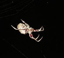 Orb Spider #3 by axemangraphics