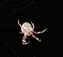Orb Spider #4 by axemangraphics
