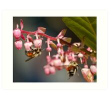Twin Bumble Bees at Work Art Print