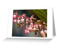 Twin Bumble Bees at Work Greeting Card