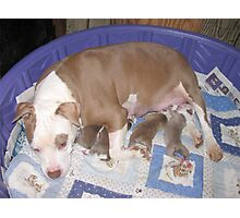 Rose And Her New Babies Photographic Print