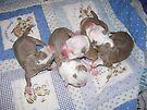 Precious Newborns by Ginny York
