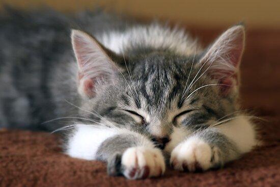 Sleeping Beauty by Teresa Zieba