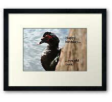 Happy Birthday..... You Old Coot Framed Print