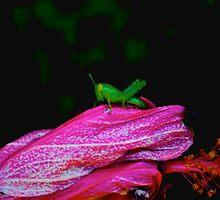 Baby Grasshopper by Jacobcroland92