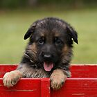 Puppy in a Wagon by Sandy Keeton