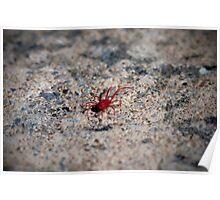 Red Spider Mite Poster