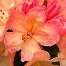Rhododendron in Sunshine by Eileen O'Rourke